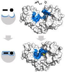 enzyme wikipedia