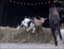Billy Goat Meme - here are 18 goat gifs you won t be able to get enough of from a