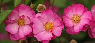 central oregon native plants the 10 best botanical gardens in oregon proflowers blog