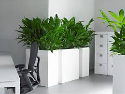plante bureau plante bureau photos de magnolisafleur