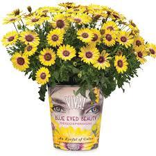 plants flowers u0026 edibles the home depot canada