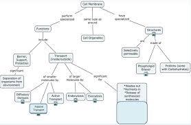 osmosis jones human anatomy answers 28 images worksheet