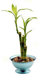 Best Low Light Houseplants Bathroom Design Magnificent Autumn Plants Plants Good For The