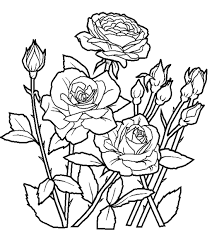 flower coloring worksheet flowers garden seeds trees pinterest