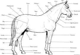 horse anatomy s16e4 coloring pages printable
