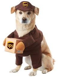 Halloween Costume Ideas Dogs 27 Pet Costumes Images Pet Costumes Costume
