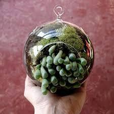 amazon com hanging globe glass terrarium air plant candle holder
