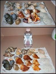Seashell Craft Ideas For Kids - 12 best seashell crafts images on pinterest crafts seashell