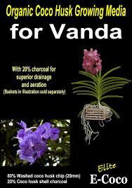 vanda orchids vanda orchids compost