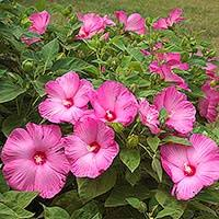 Identify Flowers - plant encyclopedia