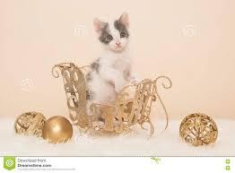 baby cat christmas scene stock photo image 74658036