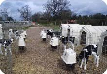 Calf Hutches For Sale Calf Hutches Calf Houses From Calf Tel In The Uk