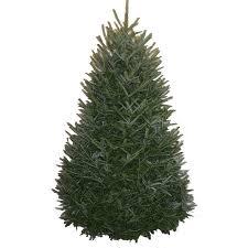 shop 8 9 ft fresh fraser fir tree at lowes