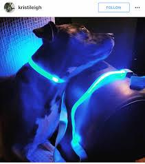 Light Up Dog Collar Led Dog Collar Led Dog Collar Dog Collars And Pit Bull