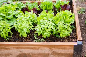 how to organize an urban gardening project in 4 easy steps goodnet