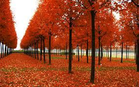 china red garden autumn nature wallpaper hd 5440 wallpaper