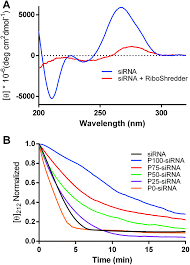 block ionomer complexes consisting of sirna and a raft synthesized