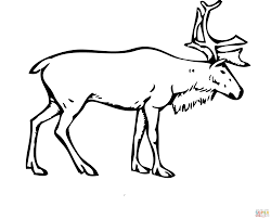 reindeer deer coloring page free printable coloring pages