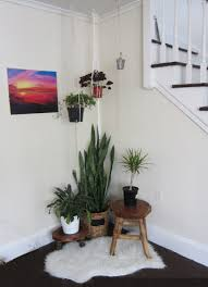 floor plant the 10 best air purifying house plants