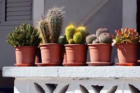 indoor cactus garden zandalus net