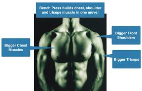 Bench Press Does Not Build A Bigger Chest How To Perform Bench Press Exercise For Bigger Chest Muscles