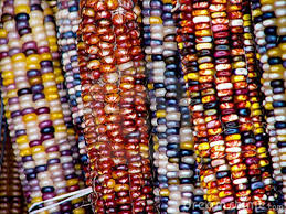 173 best indian corn fall s harvest blessing images on
