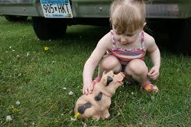 piper pets a pig u0026 more fun at tasty bbq fest in faribault
