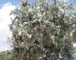 plastic bag trees now endangerednewsbiscuit newsbiscuit