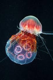 1736 best sea u0026 pond images on pinterest animals nature and