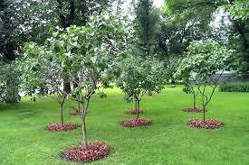 tree garden designs great garden design appletree garden designs