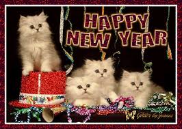 Happy New Year Cat Meme - cat happy new year merry christmas and happy new year 2018