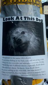 Lost Dog Meme - 20 hilarious lost pet signs blazepress