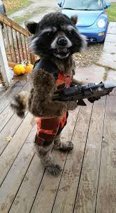realistic costumes talented crafts an incredibly realistic rocket raccoon