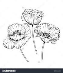 Flower Drawings Black And White - jasmine flower outline drawing google search tattoo ideas