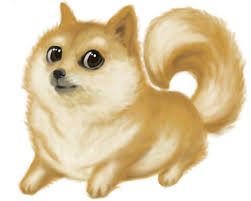 What Is Doge Meme - doge meme style shiba inu and pomeranian