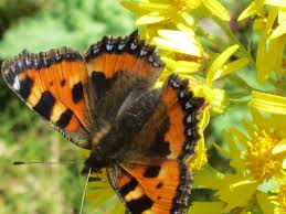 butterfly four legs vs six legs scientific