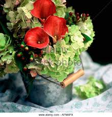 Calla Lily Vase Life Red Flowers Calla Lilies Stock Photos U0026 Red Flowers Calla Lilies