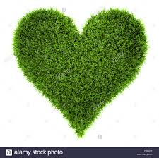 grass heart isolated on white background 3d render stock photo
