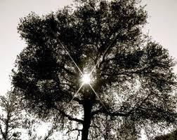 majestic tree etsy