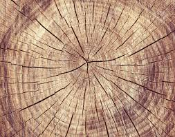 wooden cut rexture tree rings stock photo picture and royalty