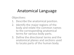 Human Anatomy Planes Of The Body Anatomical Language Anatomical Position U2013 The Subject Stands Erect