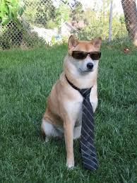 Cool Dog Meme - cool dog imgur