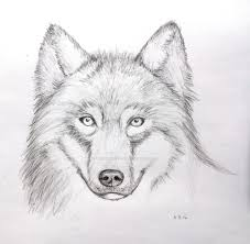 wolf face pencil drawing mark crilley video by ladyimperfectus