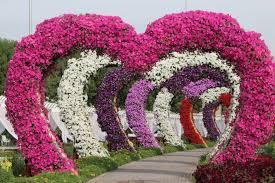 miracle garden in dubai the world u0027s largest natural flower garden