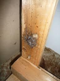 Bed Bugs Smell Uk Bed Bug Infestations Rise Debugged