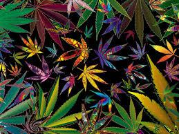 129 best 4 20 images on pinterest medical marijuana cannabis