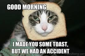 Good Morning Cat Meme - 25 good morning memes to kickstart your day sayingimages com