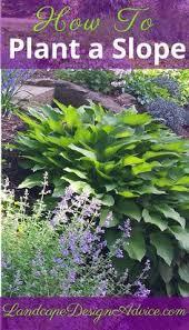 25 trending landscaping plants ideas on pinterest front yard