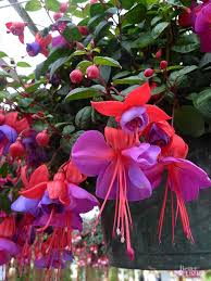 Low Light Outdoor Plants Shade Flowers That Will Make You Forget The Lack Of Sun Shade