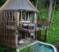 Backyard Treehouse Ideas Inside Tree Houses How To Decorate Small House Birkdale Drive